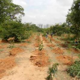 Tree-Planting_After