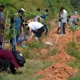 Tree-Planting_Team3