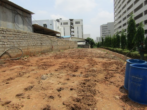 Before planting: Our area was an empty space of hard dirt.
